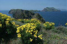"""California Island Sunshine   """"If you truly love nature, you will find beauty everywhere,"""" Vincent Van Gogh"""