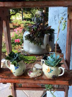 Old china for succulents
