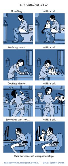Life with and without a cat