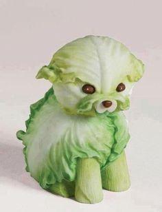 cabbage puppy