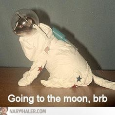 BRB VINTAGE CAT GOING TO THE MOON