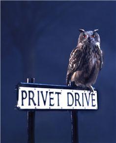 Privet Drive...