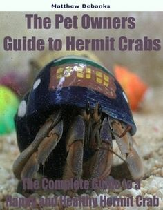 Hermit crabs make for an unusual pet but people who have decided to become hermit crab owners quickly discover that these pets are interesting and easy to care for