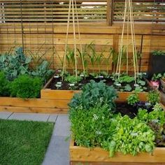 Top Urban Garden Design and Planning I would love a garden bed (or three) like this at work!!