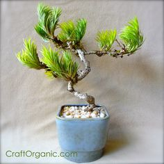 """Make a """"Faux"""" #Bonsai Tree with #AirPlants so cool!"""