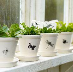 Beautiful green herbs on the windowsill.