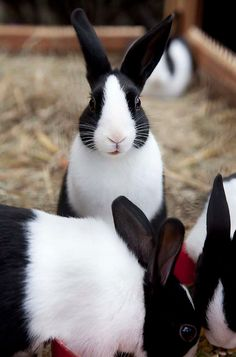 Bunny Rabbits ♥ on Pinterest | 61 Pins