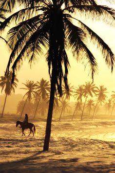 palm, hors, desert, tree, dream, sunset, at the beach, album cover, place