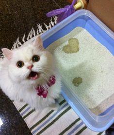 I peed you a heart.