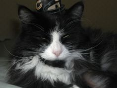 cat, gizmo