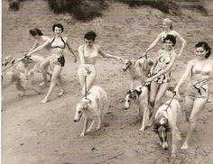 Borzois at the Beach, 1952.