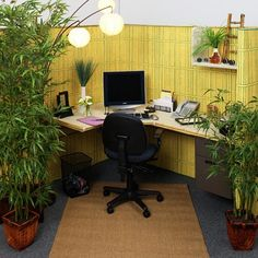 Office Cubicle Decoration in Great Sensation : Relaxing Office Cubicle Decoration With Real Green Plants