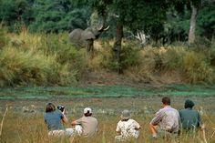 Tourists on a walking safari Zambia. http://www.lonelyplanet.com/zambia.