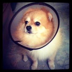 Best Glamour Shot Featuring a Cone #adorable