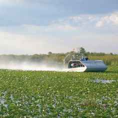Visit the Florida Everglades and witness nature's wonders all around you while gliding over a river of grass in an airboat at Everglades Holiday Park!