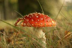 cats, mushroom, little red, season, autumn