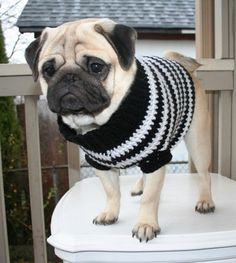 Sweet Pug!