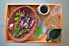 Make Like a Montessori Mama - Plant Activities