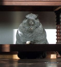 I find you guilty!  Now, what's the charge? - Jonas from Dissaproving Rabbits