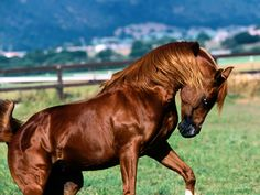 Google Image Result for http://www.horse-wallpapers.com/bulkupload/wallpapers/All%2520Breeds/mountain-mail-horse.jpg