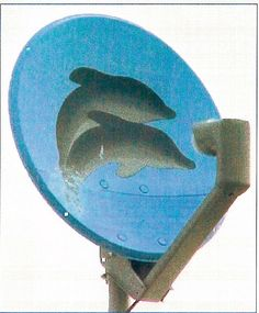 Dolphins - satellite dish