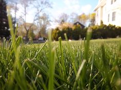Surrey lawn mowing services. #surrey #lawnmowing #mowing