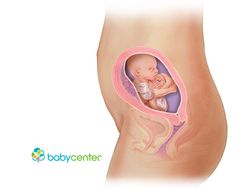 What your baby looks like at 21 weeks @babycenter