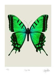green butterfly idea for my 3d tattoo