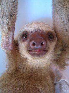 I love sloths!!