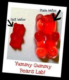 Put gummy bears in water! science idea.