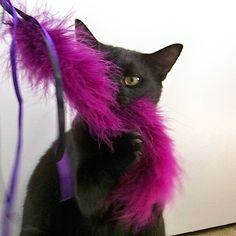 How-To: Feather Wand Cat Toy