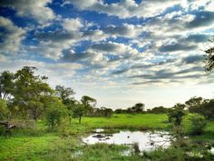 Dream of going on safari?  Check out Kruger National Park, South Africa