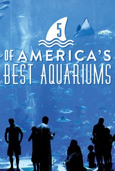 Fascinated by the under world? ...Not the under world of criminals! The under water world! These are the 5 best aquariums in the U.S.