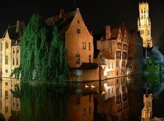 Swans in the canals of Brugge, Belgium 