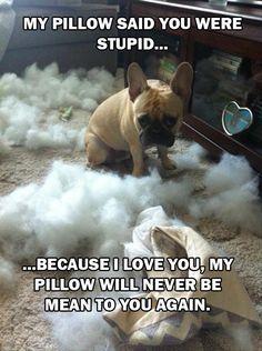pillow, dog
