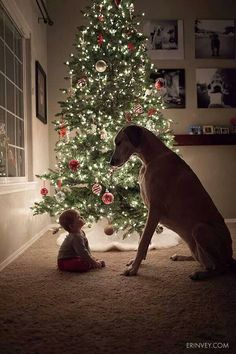 christmas cards, christmas pictures, baby dogs, baby christmas photos, christmas card pictures, christmas trees, big dogs, friend, kid