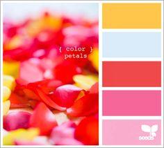 color petals