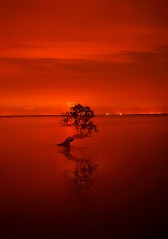 Alone, friend with reflection