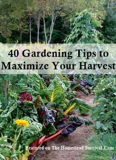 The Homestead Survival   40 Gardening Tips to Maximize Your Harvest   Gardening - Knowledge - Homesteading Skill