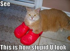Crocs - I will never understand them. Well, cat's probably, either.