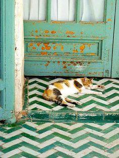 cat outside a green door amidst a green floor