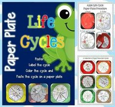 Paper plates life cycle