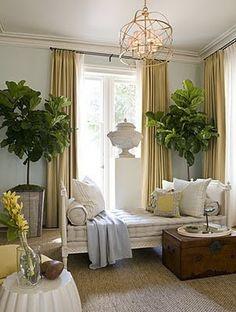 wall colors, interior, living rooms, blue walls, tree, light fixtures, fiddl leaf, leaf fig, leaves
