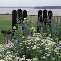 A beautiful coastal garden; coastal living.com
