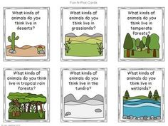Informative Writing & Research - With this project students will research and write about different ecosystems or biomes. Then they'll create an ecosystem report booklet to share!