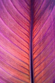 Leaf in blooming color