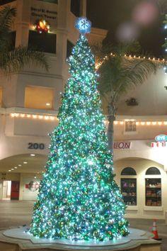 <3 a blue Christmas Tree Facebook: Anna Maria Island Beach Life www.annamariaislandhomerental.com