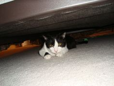 He thinks hiding under the bed is going to stop me from cutting his nails.  Think again Buster.
