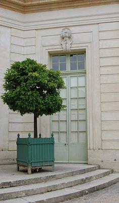 Tree in box; would look good framing a door