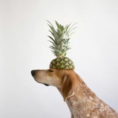 The best! Pineapple head!!